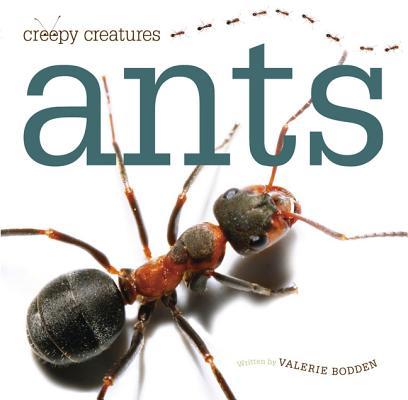 Ants By Bodden, Valerie